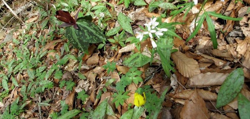 tn wild spring
