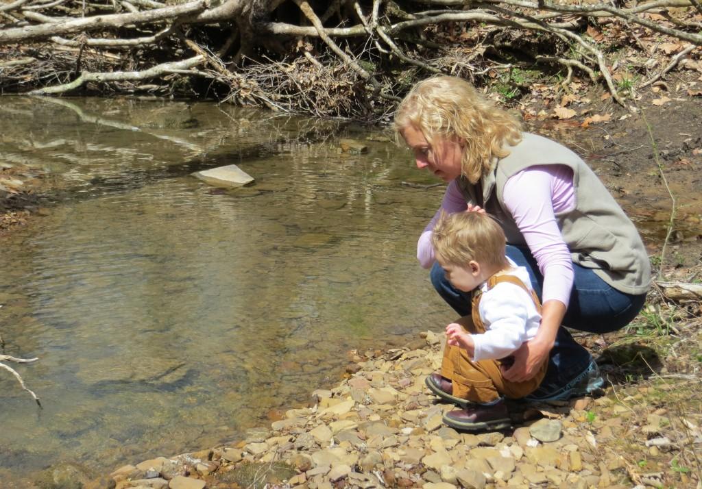 Creek in Wiggins Hollow