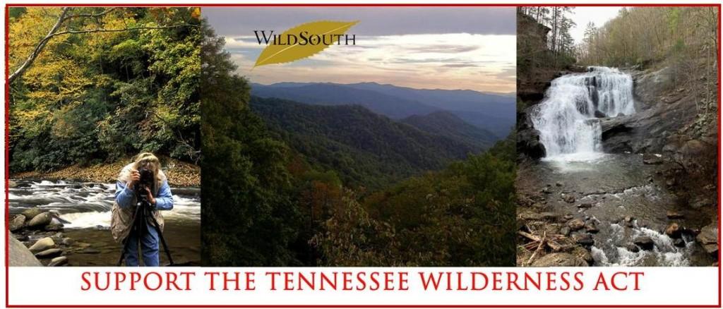 TN Wild Email
