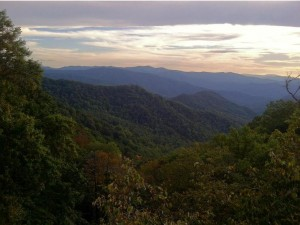 TN Wild view