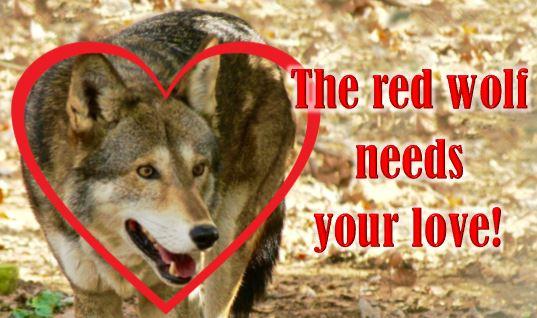 redwolfneedsyourlove