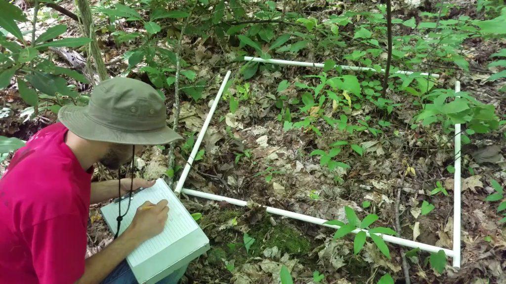 vegetation_survey_1600x900