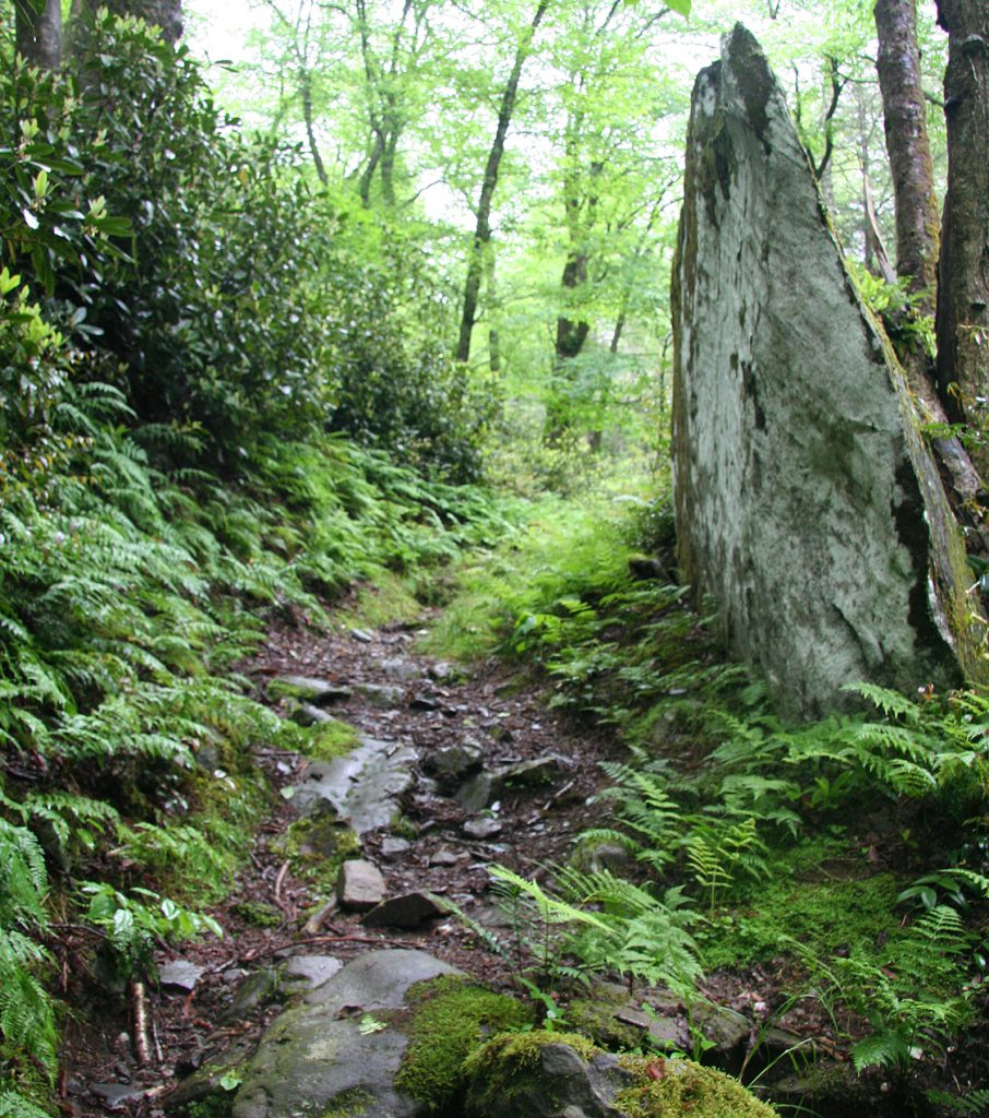 Indian Gap Trail in Great Smoky Mountains National Park