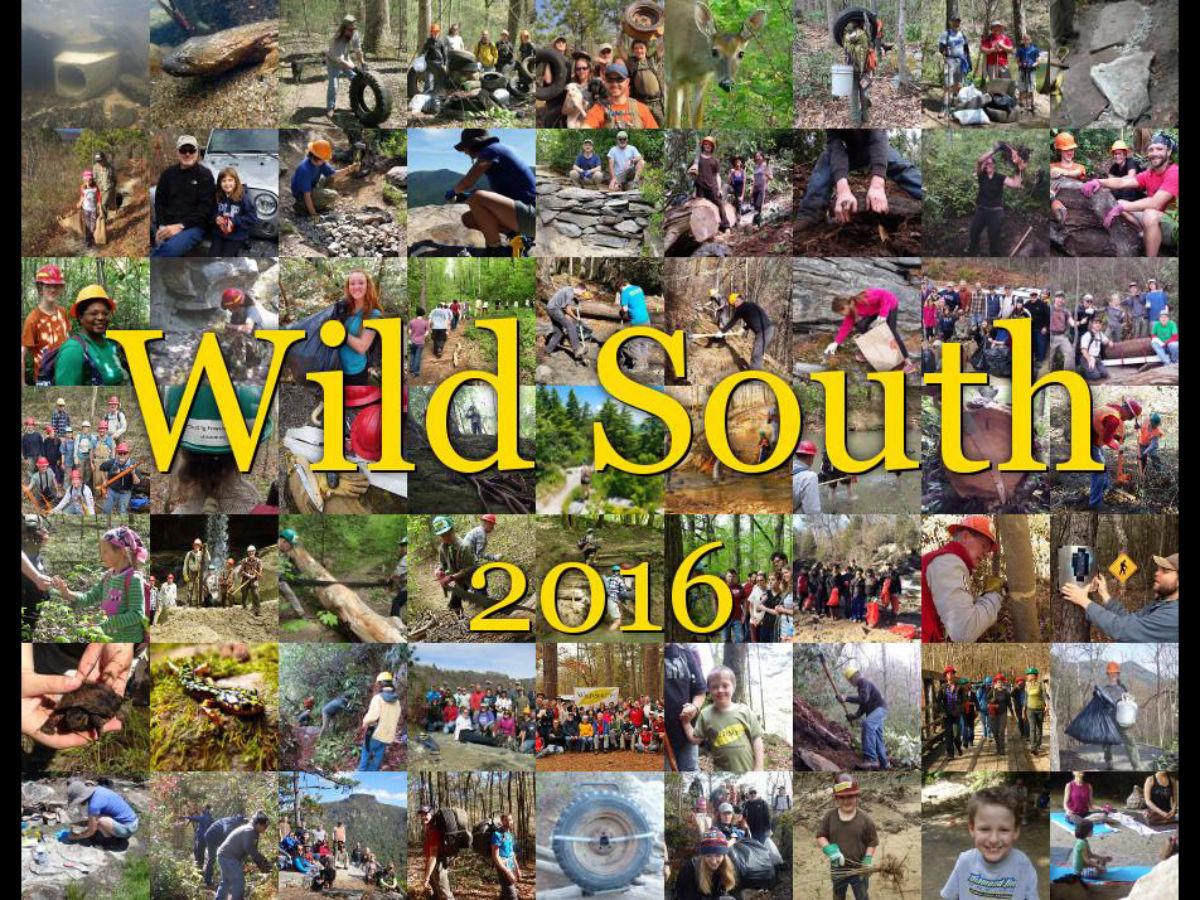 Wild South 2016 - HQ - 01