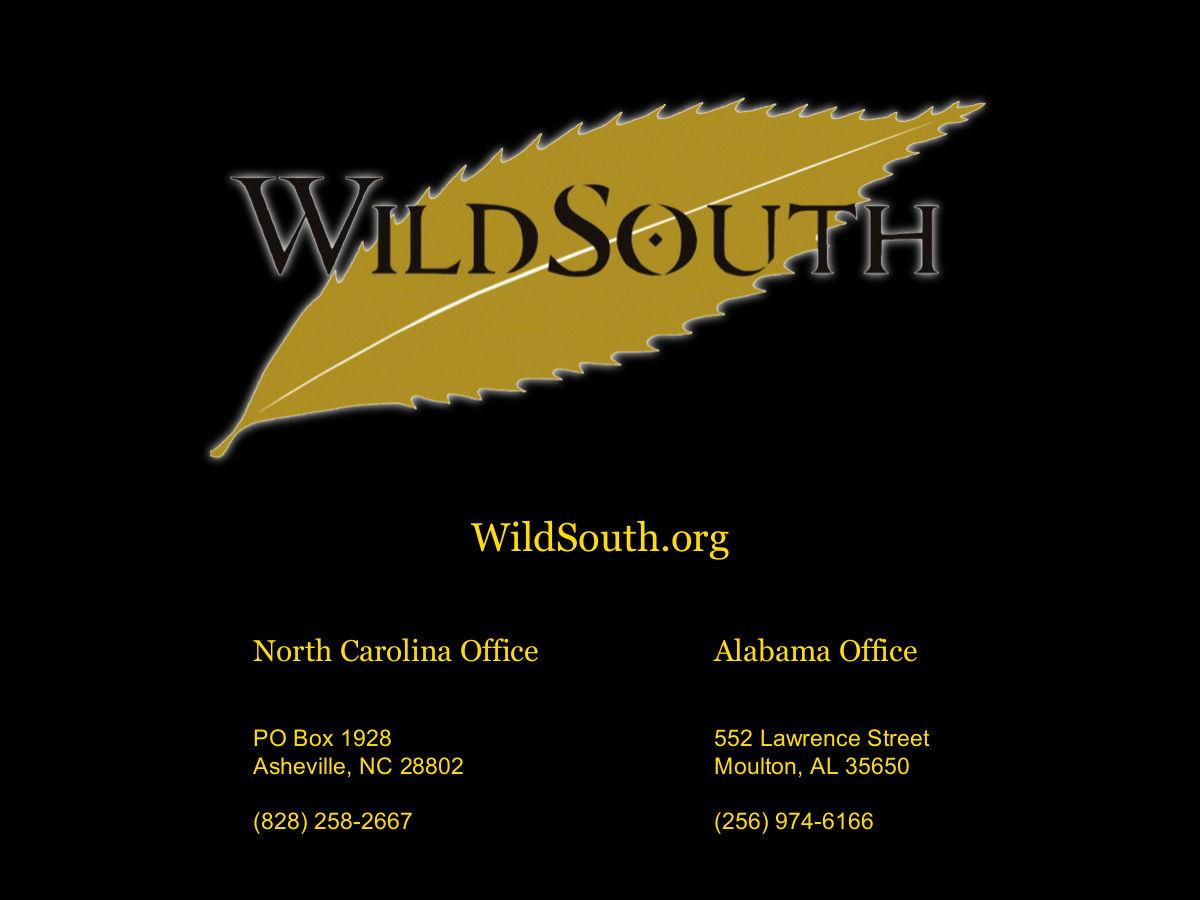 Wild South 2016 - HQ - 22